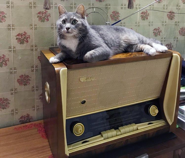 Реставрация винтажной радиолы Латвия